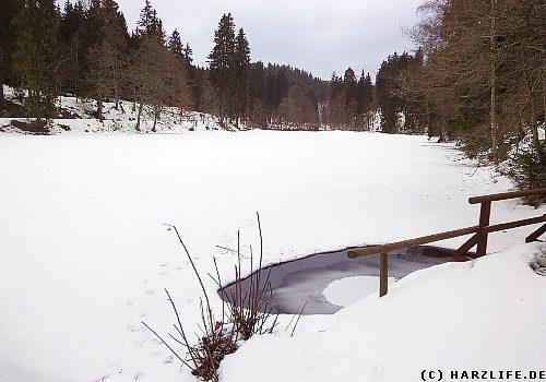Der Neue Steinbacher Teich