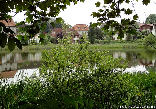 Der Ochsenpfuhl-Teich in Herzberg