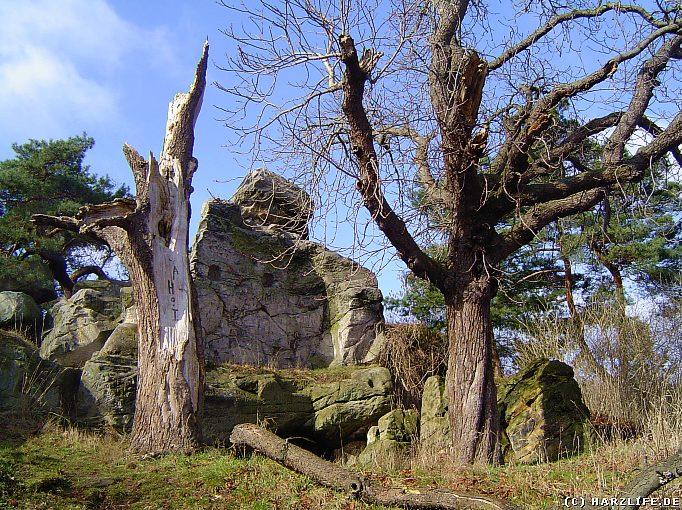 Langenstein - Bizarre Felsen und Bäume