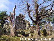 bizarre Fels- und Baumlandschaft