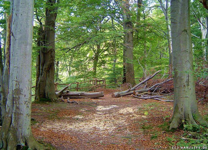Naturschutzgebiet Itelteich bei Walkenried - An den Itelklippen