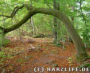 Ein Baum wie ein Torbogen