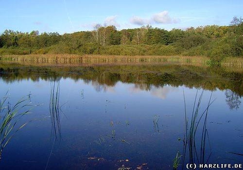 Der Bruns-Teich bei Walkenried