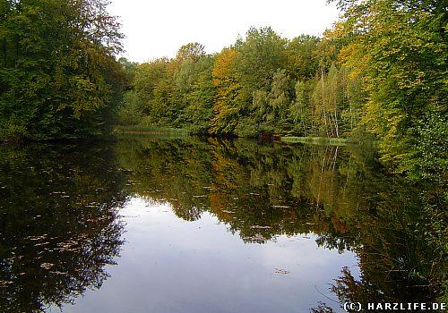 Der Eck-Teich bei Walkenried