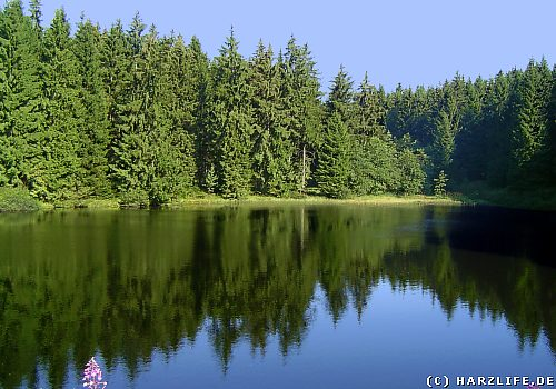 Der Mittlere Einersberger Teich