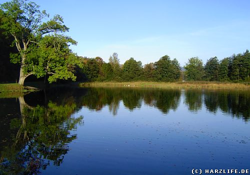Der Röseteich bei Walkenried