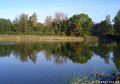 Der Sack-Teich bei Walkenried