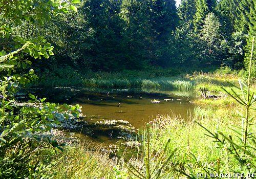 Der Untere Einersberger Teich